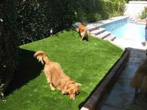 Your Dogs Will Love Their Pet Turf Installation from Southwest Greens of Bakersfield / Dogs Run on Artificial Turf in Bakersfield, CA After a Pet Turf Installation from Southwest Greens