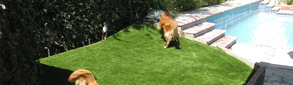 Pet Turf Installation from Southwest Greens of Bakersfield / Dogs Run on Artificial Turf in Bakersfield, CA
